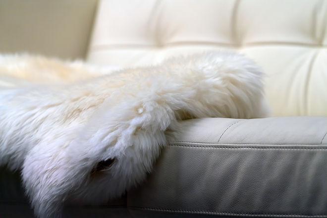 Sheepskin lies on a white leather sofa,