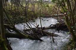 Debris dam in Lagg Wood.jpg