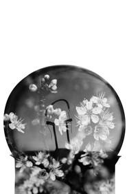 Relander Style Light Bulb 1 Flower 2.jpg