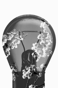 Relander Style Light Bulb 4 Flower 2.jpg