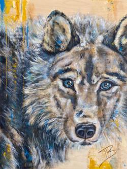 Loup, Pyrogravure et acrylique sur panne