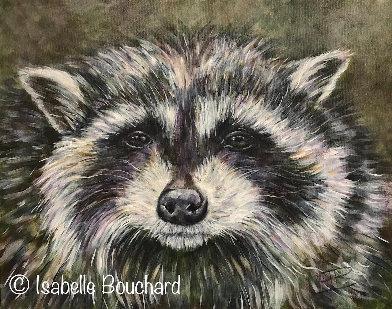 Isabelle Bouchard Artiste Raton laveur 16x20 2017