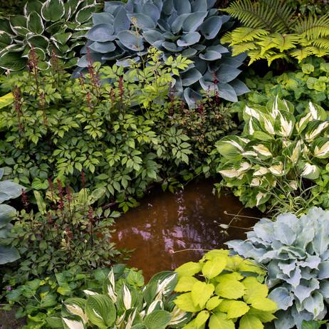 Schattengarten Mitte Juni