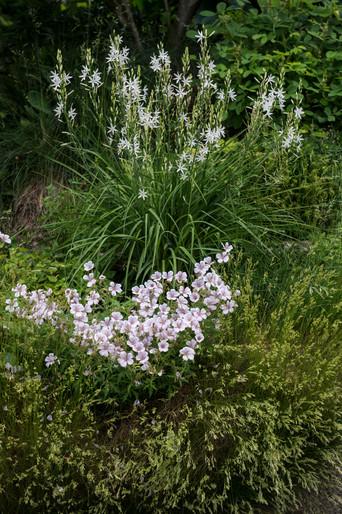 Storchenschnabel und Graslilie