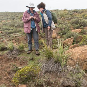 Elsa Pooley und Silvia beim Bestimmen einer Pflanze