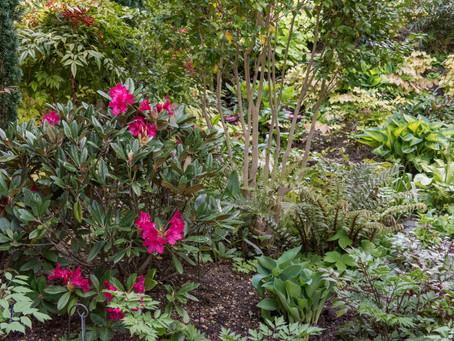 Der Schattengarten bekennt Farbe