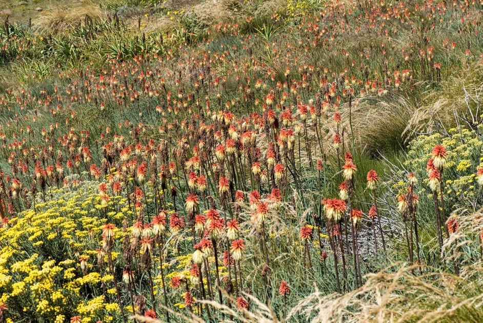 Blumenpracht auf 2500 Metern