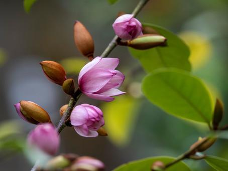 Magnolien auf dem Prüfstand