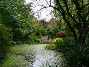 Ein Woodland Garden in der Schweiz