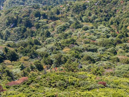 Botanische Offenbarung auf Yakushima