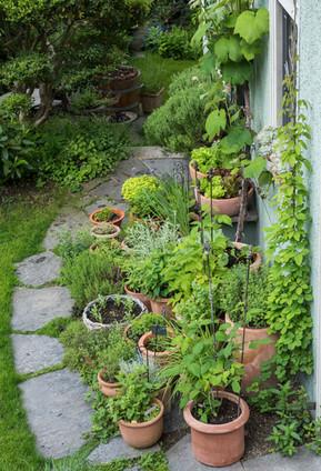 Der Kräutergarten nach sechs Jahren