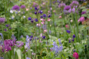 Ein luftig-zartes Frühlingsborder