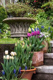 Tulpen für faule Gärtner
