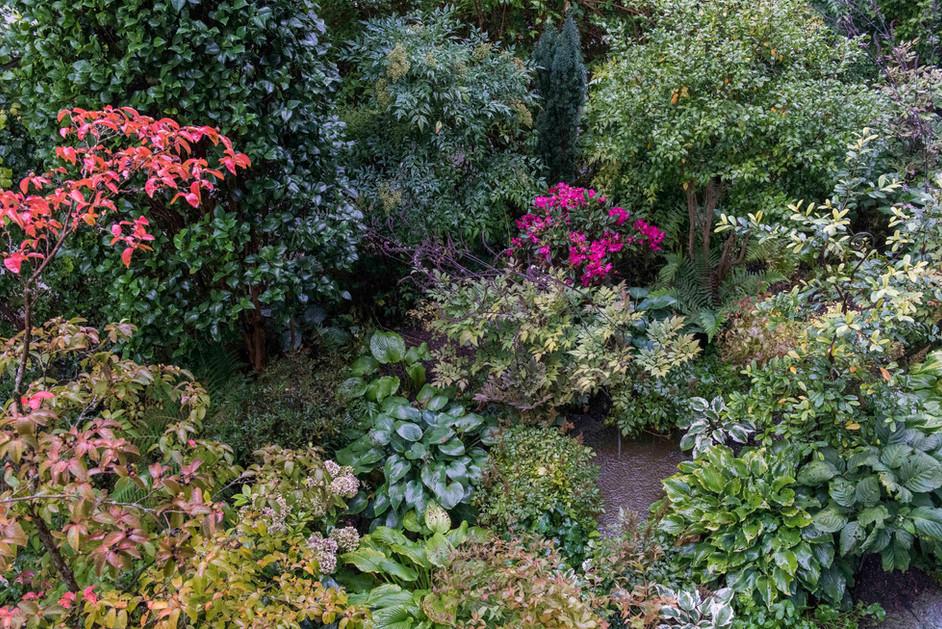 Der Schattengarten im Regen, Mitte Oktober.j