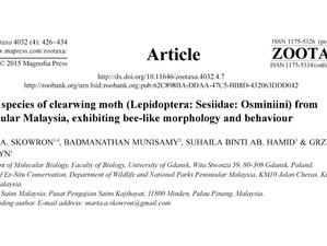 New clearwing moth species discovered in the Malaysian jungle!
