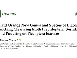 New clearwing moth species discovered in Thailand's jungle!