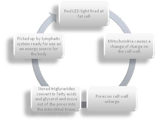 Facial Treatments | Body Waxing | Advanced Skin Care | Body Wraps | Body Contouring | Lipo Light