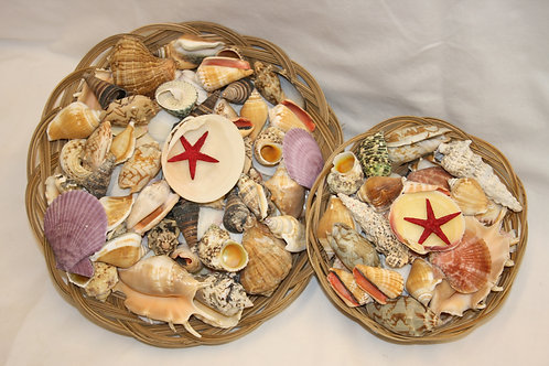 Shells - collection of seaside shells