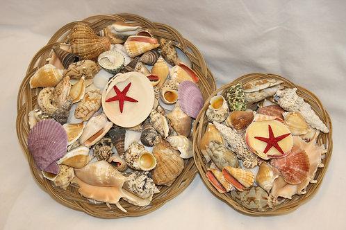 Shells - collection of seaside shells