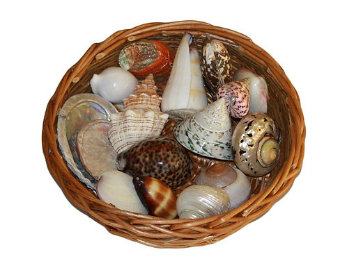 A Collection of Shells as an educational resource for children in their early years.