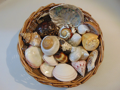 Shells - Collection of 16