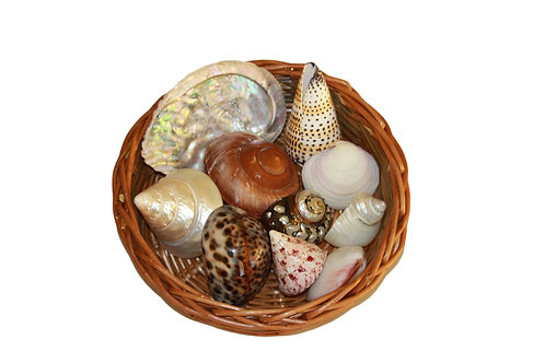 Basket containing a variety of shells as an educational resource for the early years.