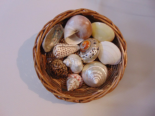 Shells Selection of 10