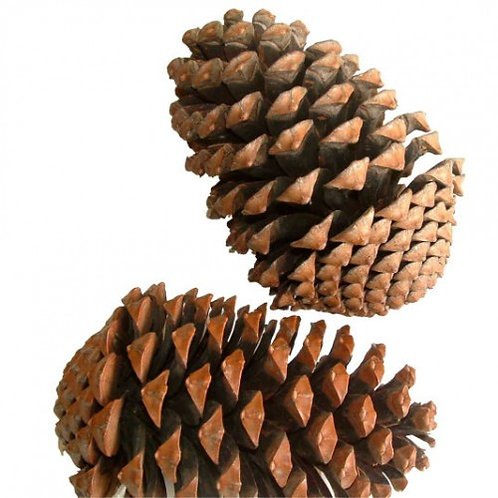 Large pine cones for heuristic play