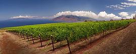 Wine and Farm Tour