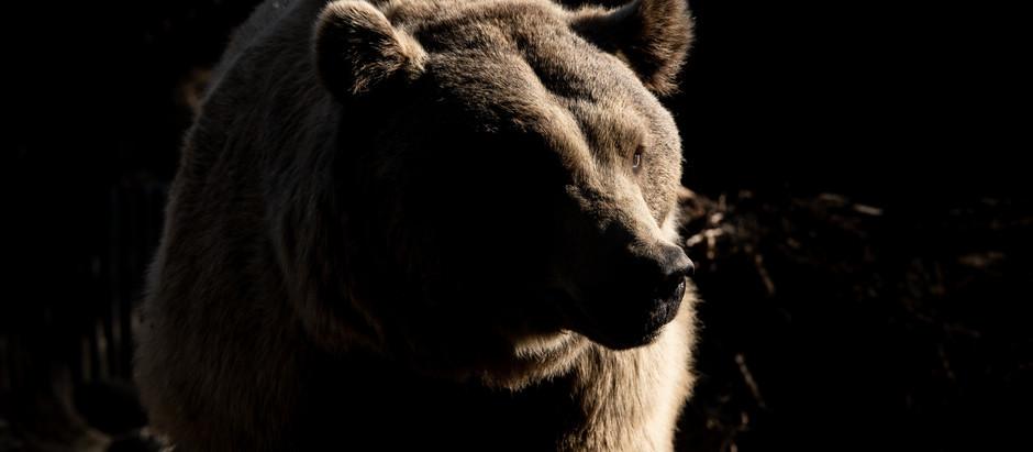 DAX Aktuell: Bären lauern, relative Schwäche bei starkem US-Aktien-Wochenstart