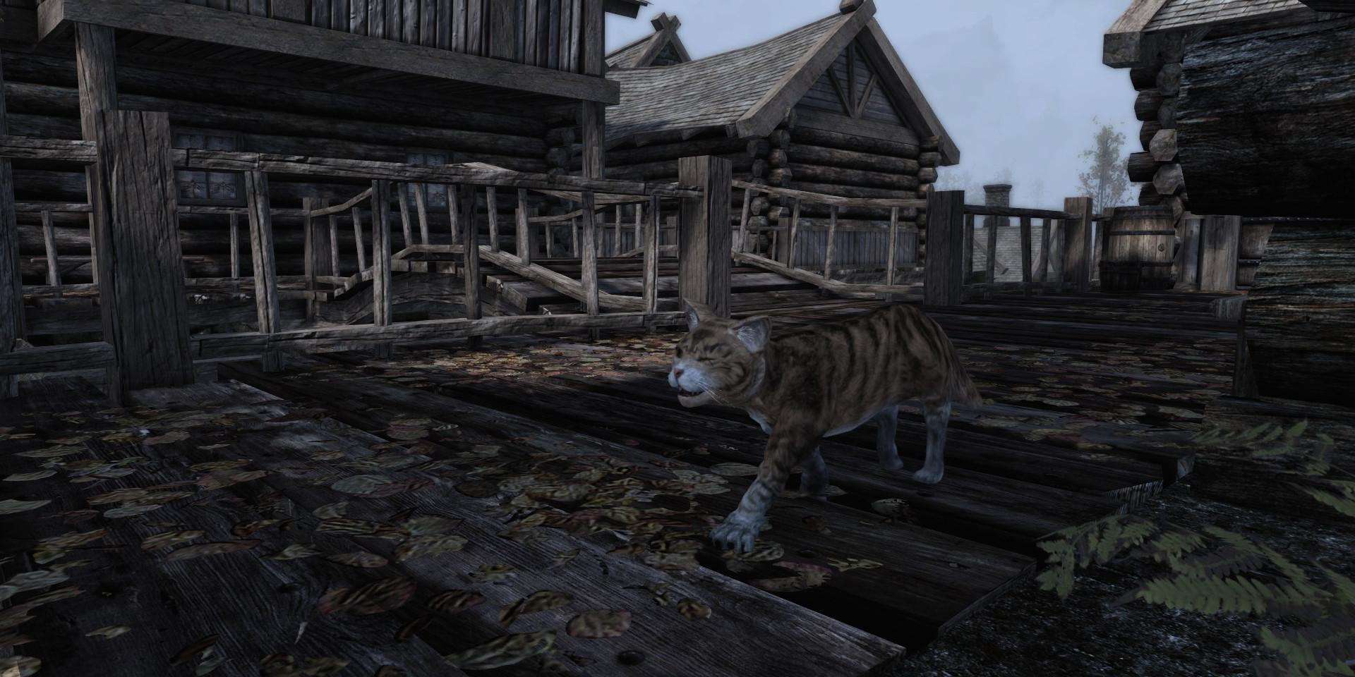 Riften Cat