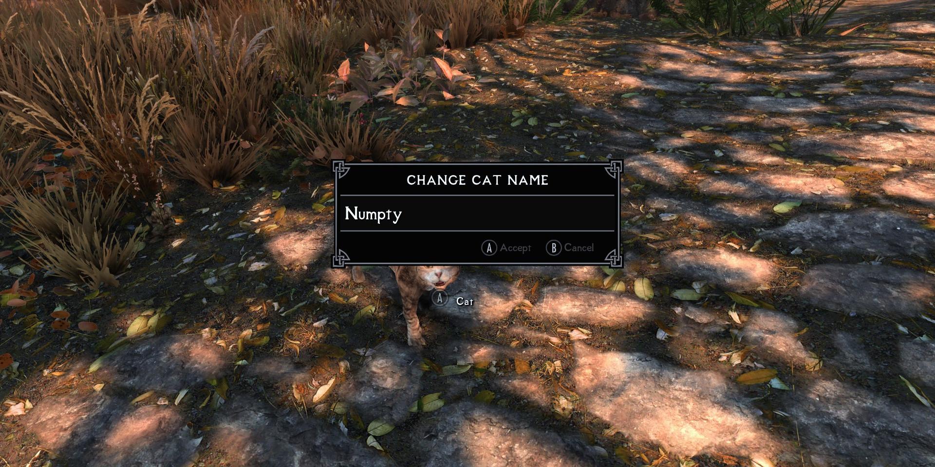 Name Cat