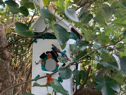 【志塾】第6回 ワークショップ 「シマの野鳥たちと優しい巣箱つくり」を終了