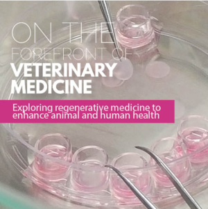 On the Forefront of Vet Medicine: Exploring Regenerative Medicine to Enhance Animal and Human Health