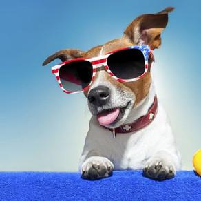 Σκυλίσιες συμβουλές για το καλοκαίρι!