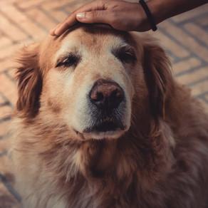 Παθαίνουν οι σκύλοι άνοια;