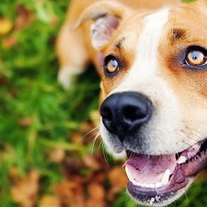 Γιατί είναι σημαντικό να έχει ο σκύλος σου αυτοπεποίθηση;