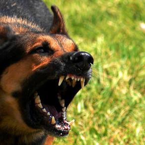Πώς διαχειριζόμαστε τη φοβία και την επιθετικότητα στην θετική εκπαίδευση σκύλων