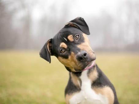 Πώς να κάνεις το σκύλο σου να σε ακούει