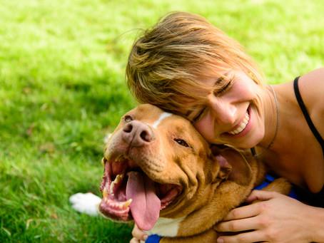 Γιατί να υιοθετήσεις έναν ενήλικο σκύλο