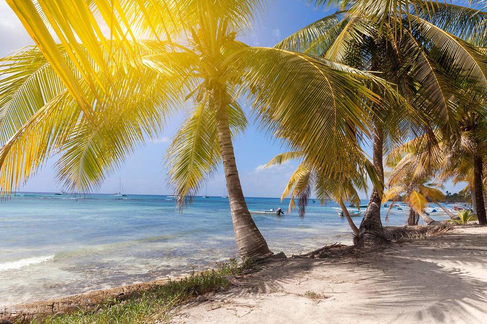 tropical-paradise-palm-trees-luxury-holiday-tropic-D732CN5.jpg