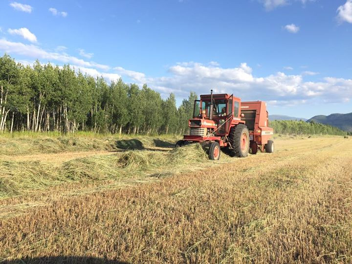 Exciting make hay while the sun shines