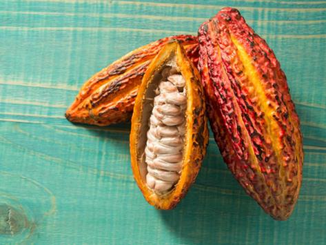 Le Pérou, terre d'origine du cacao