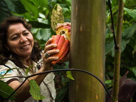 Perú, tierra de origen del cacao