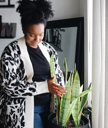 How To Care For A Snake Plant