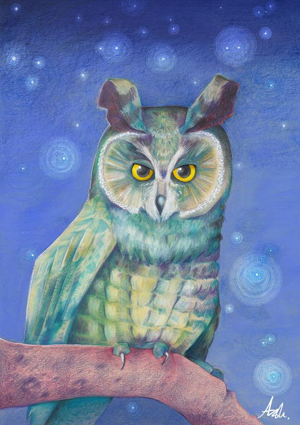 Irish Long-Earred Owl