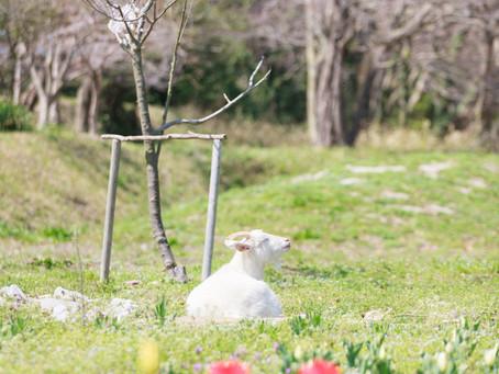 春シーズンのおすすめロケーション