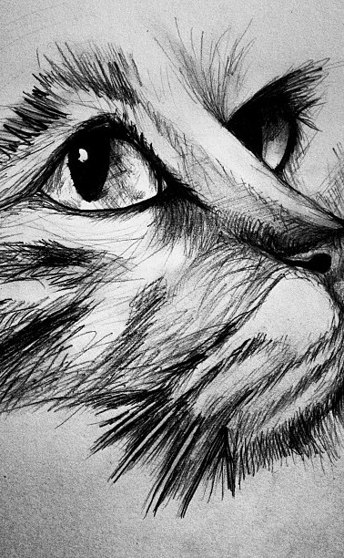 #jajmlesart#cat#drawing.jpg