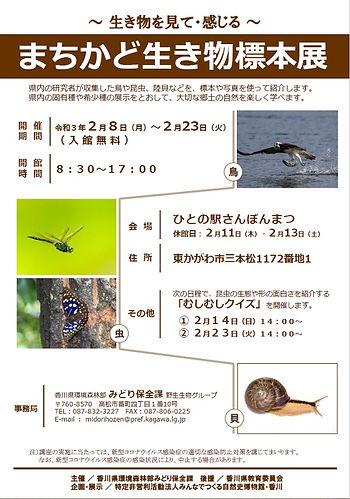 20210208_まちかど生き物標本展_三本松.jpg