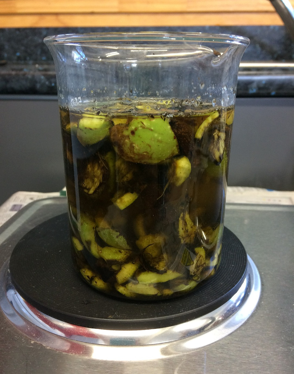 Making walnut ink in a Montessori classroom